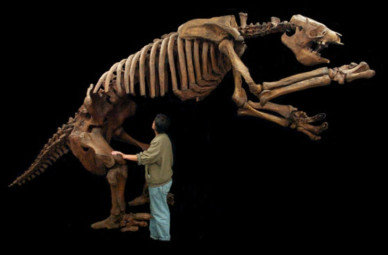 Eremotherium Giant Ground Sloth Skeleton Replica - dinosaursrocksuperstore