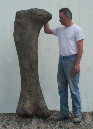 Giant Apatosaurus Femur Replica with base - dinosaursrocksuperstore