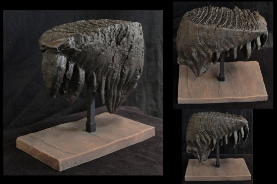 Mammoth Tooth Large Replica w/ Base - dinosaursrocksuperstore