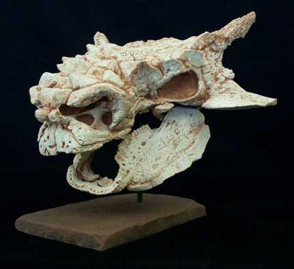 Minotaurasaurus Skull Replica with base - dinosaursrocksuperstore