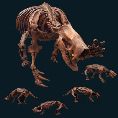 Mylodon Ground Sloth Skeleton Replica - dinosaursrocksuperstore