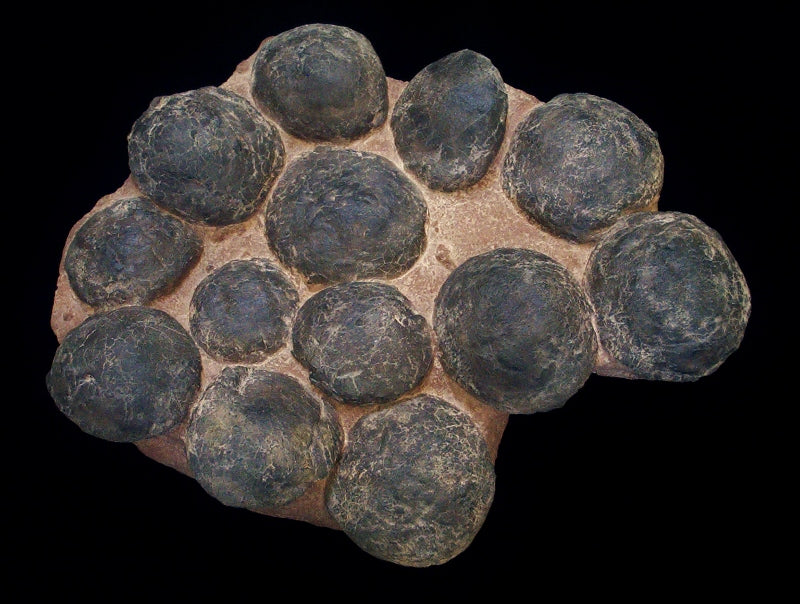 Ornithopod Egg Nest Replica of 13 eggs - dinosaursrocksuperstore