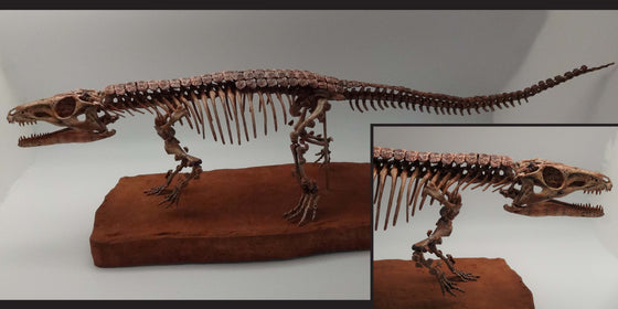 Parringtonia Gracilis skeleton Replica - dinosaursrocksuperstore