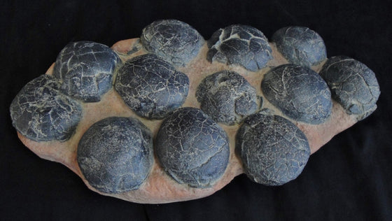 Therizinosaur Egg Nest Replica of 12 eggs - dinosaursrocksuperstore
