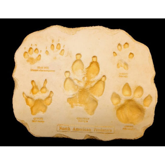 Predator Footprint Replica Plaque - dinosaursrocksuperstore