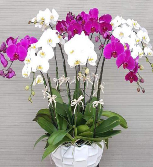 tet-potted-orchids-03