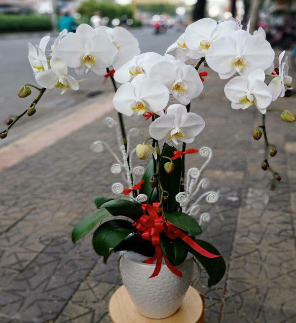 tet-potted-orchids-05