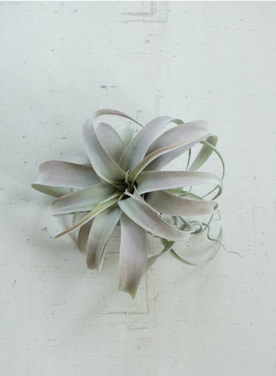 Artificial Grey Air Plant - Extra Large