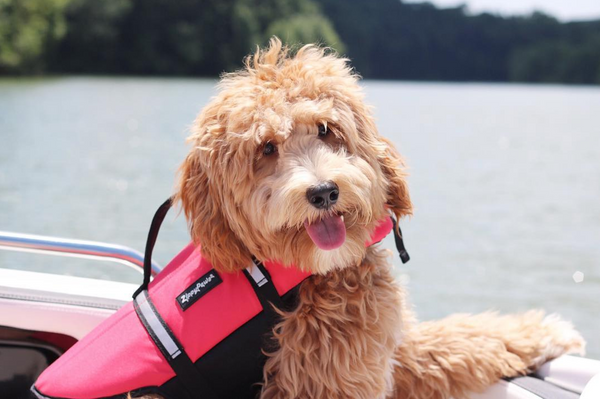 Adventure Dog Life Jacket