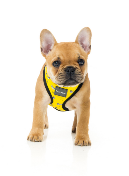 FUZZYARD | MONKEY MANIA DOG HARNESS