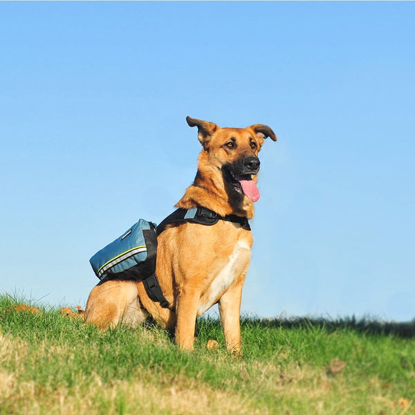 Adventure Dog Backpack