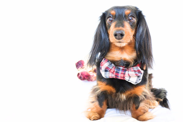 Elanor | Red Plaid Bow Tie