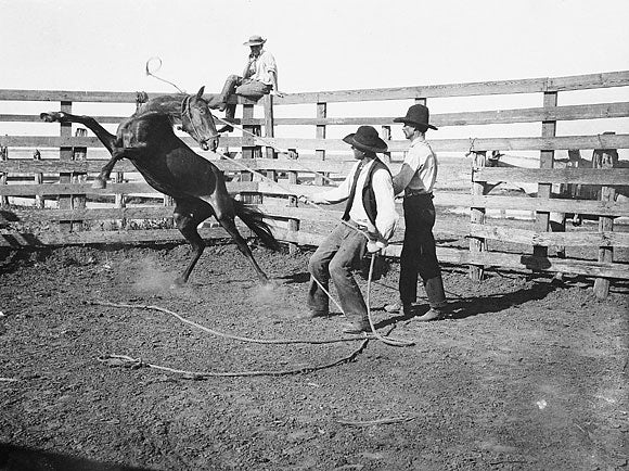 A Tool for Halter Training