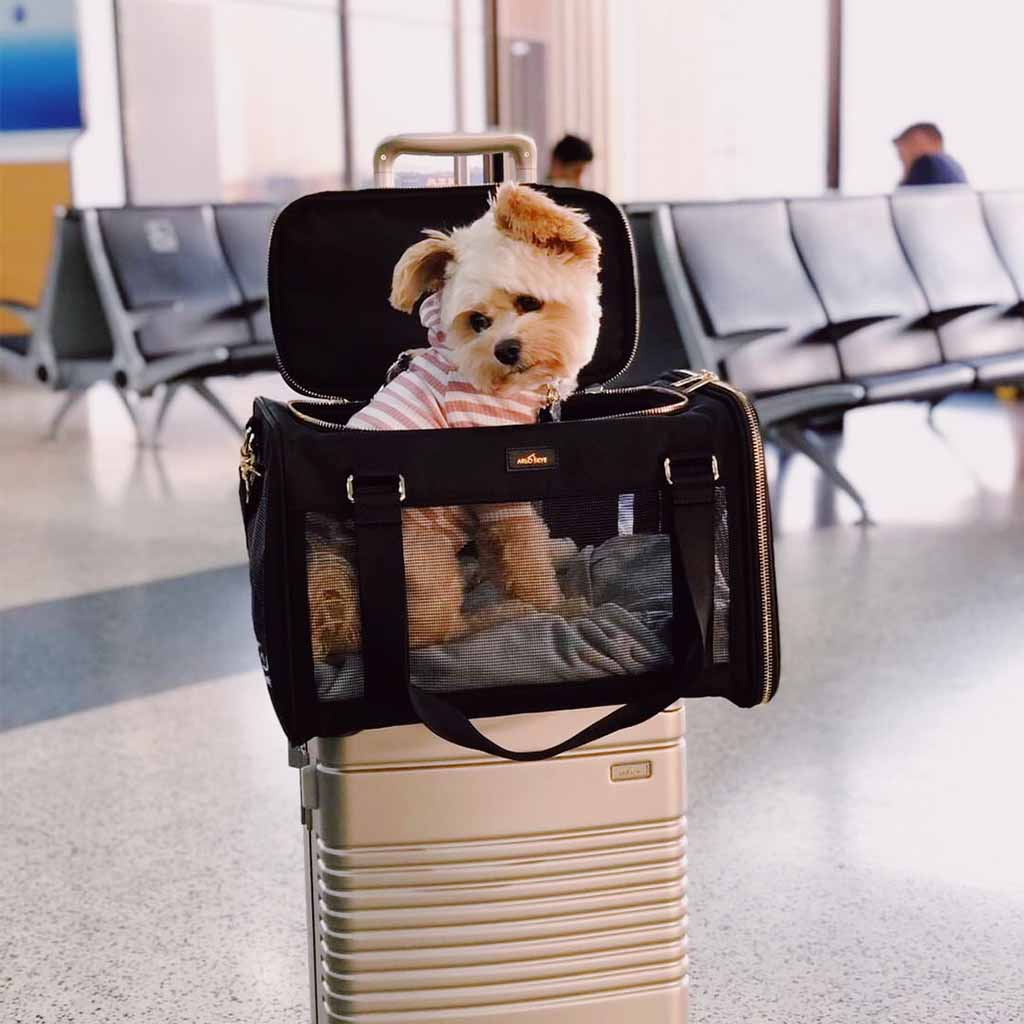 Puppy in pet carrier attached on top of a frame carry-on in champagne.