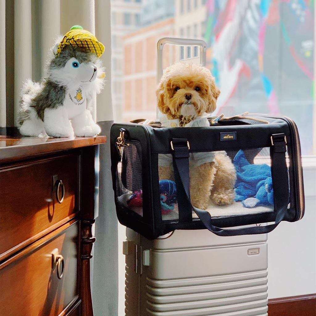 A dog in an Arlo Skye Pet Carrier in a hotel room.