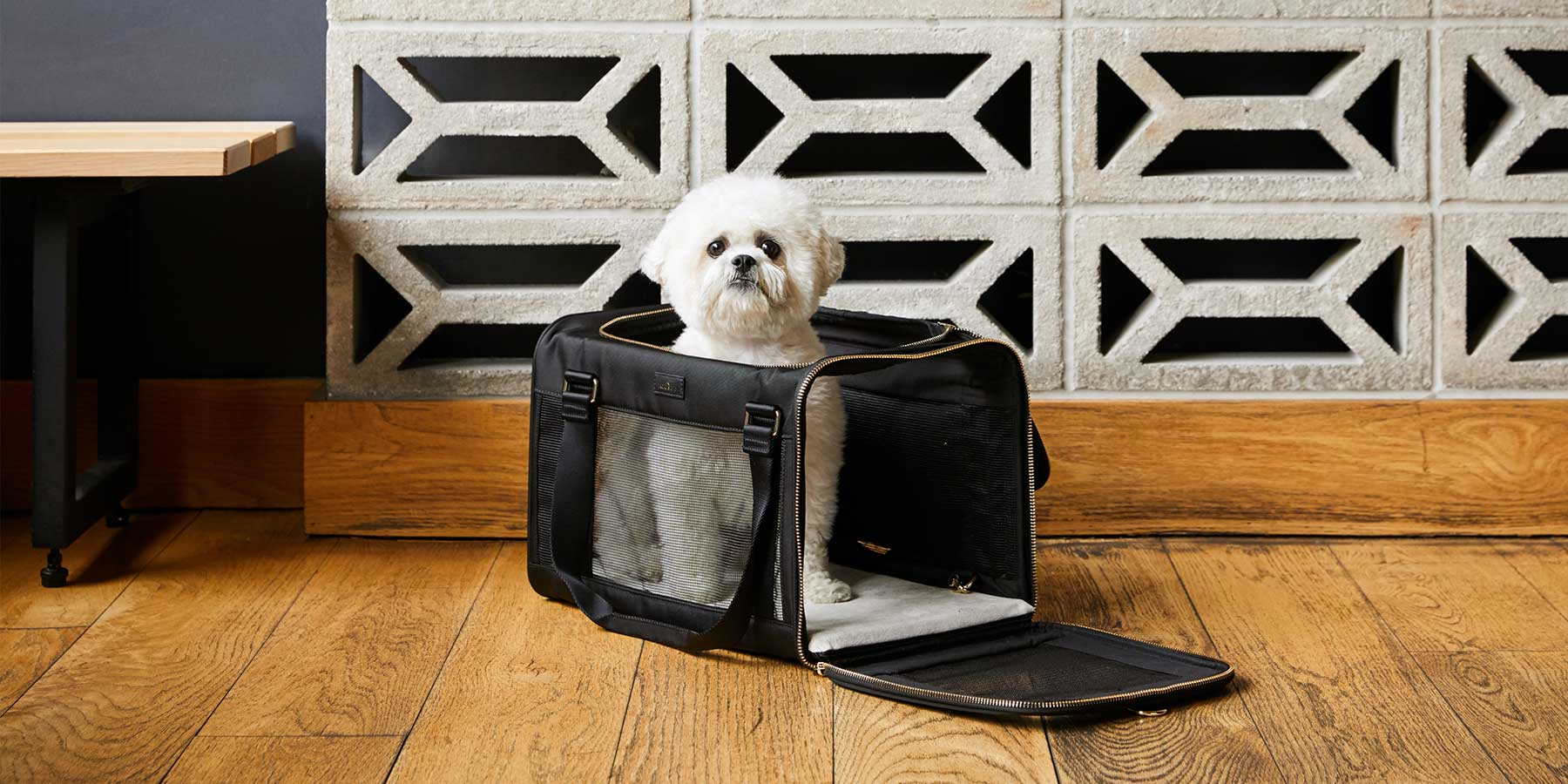 Dog sitting inside of pet carrier with top and size unzipped.