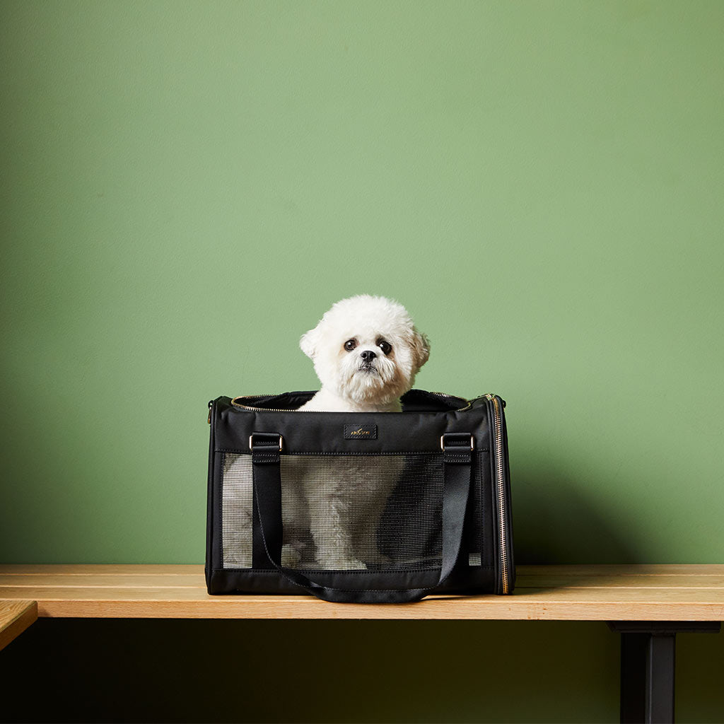 The Arlo Skye dog carrier placed on a bench with a white dog sitting inside against the background of a green wall.
