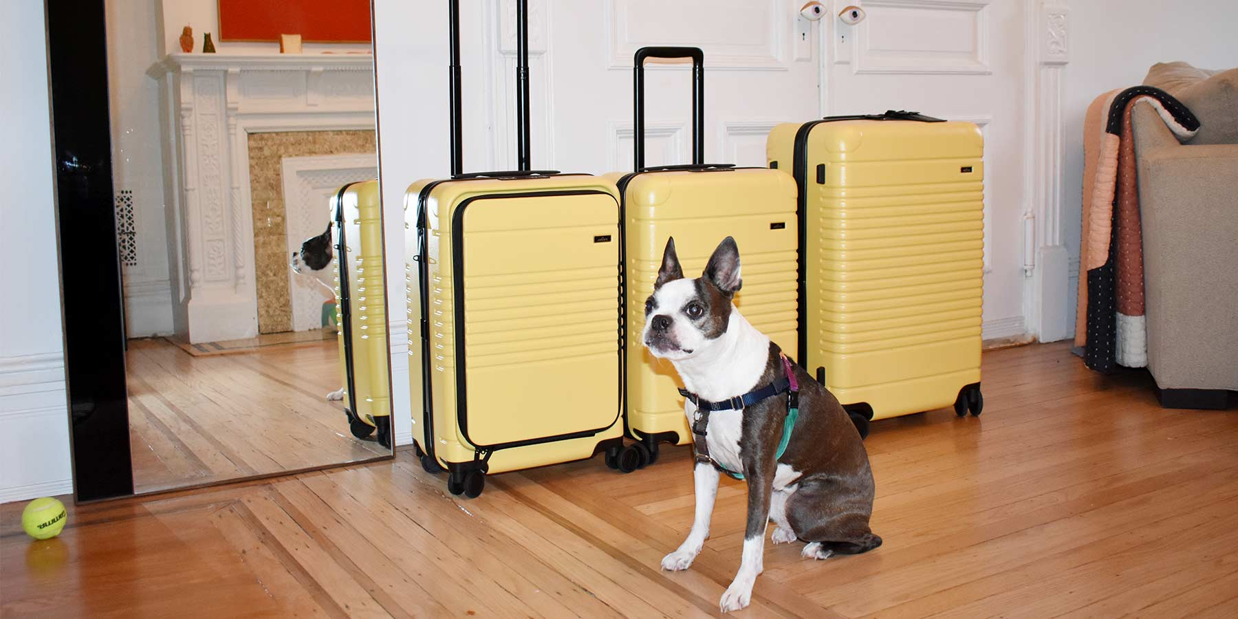 The Arlo Skye x Dusen Dusen collection of 3 zipper suitcases with Dusen Dusen's dog in front.