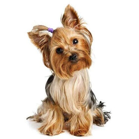 Diamond painting Cute puppy with purple hair tie - Gift-Frog