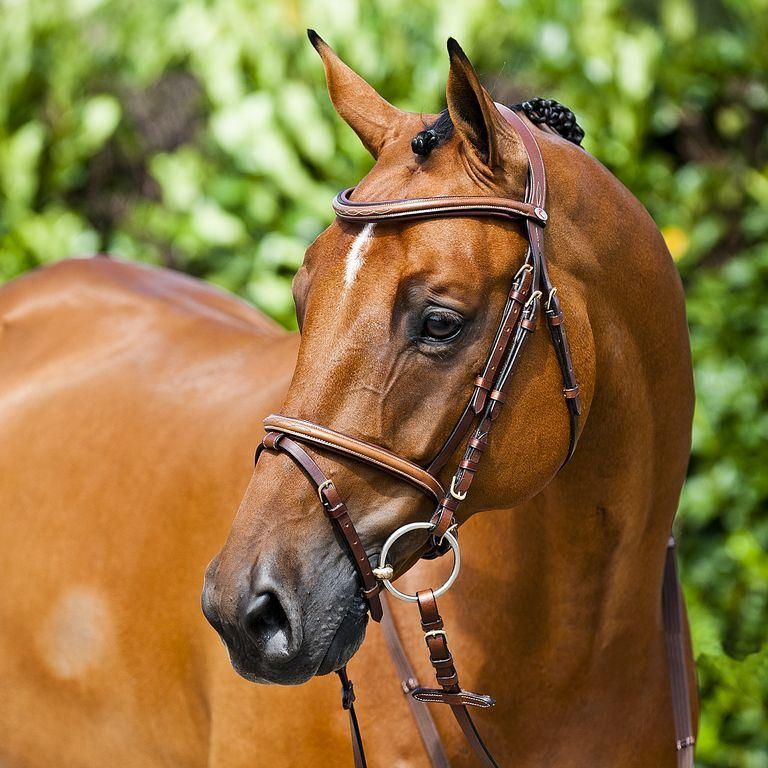 Bridle Horze Constance - Freestyle Saddlery
