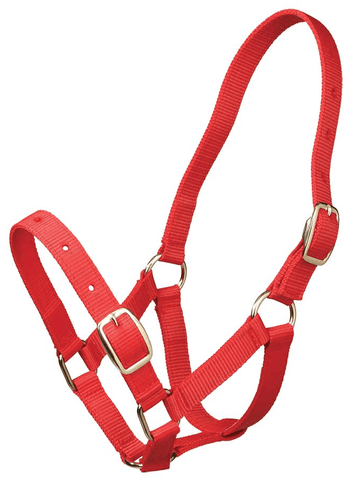 Halter foal - Freestyle Saddlery