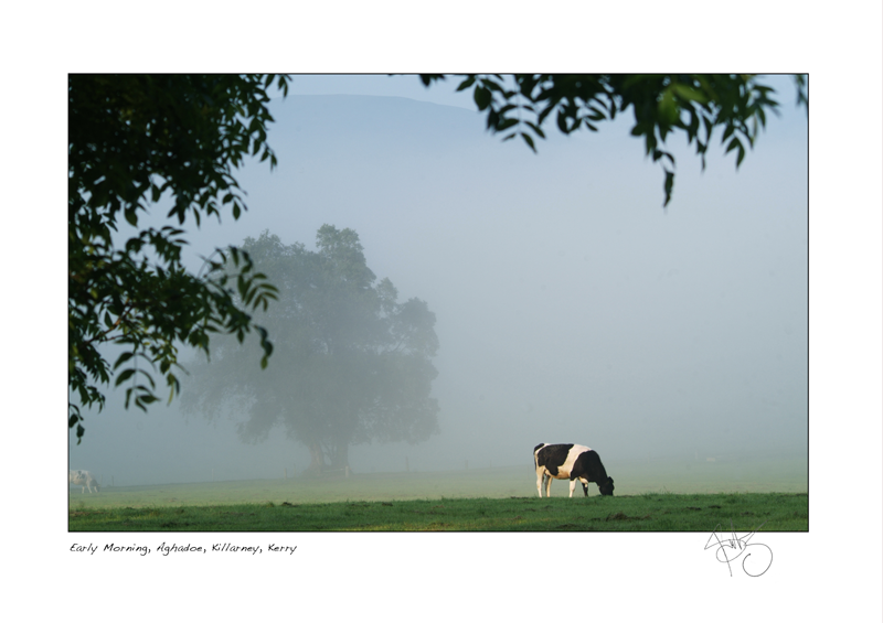 27. Early Morning, Aghadoe, Killarney