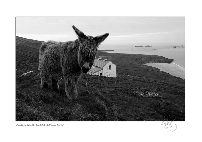 28. Donkey, Great Blasket Island, Kerry