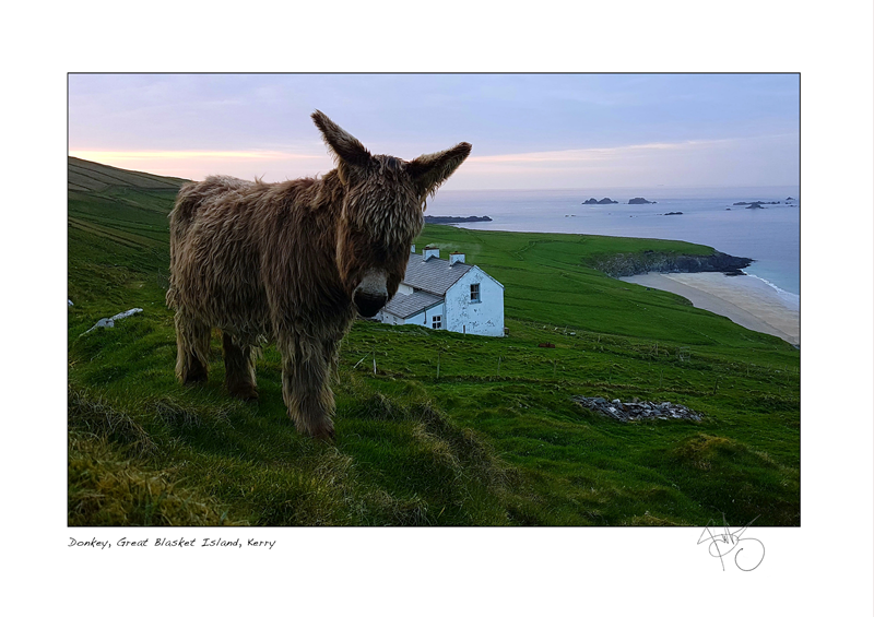29. Donkey, Great Blasket Island, Kerry