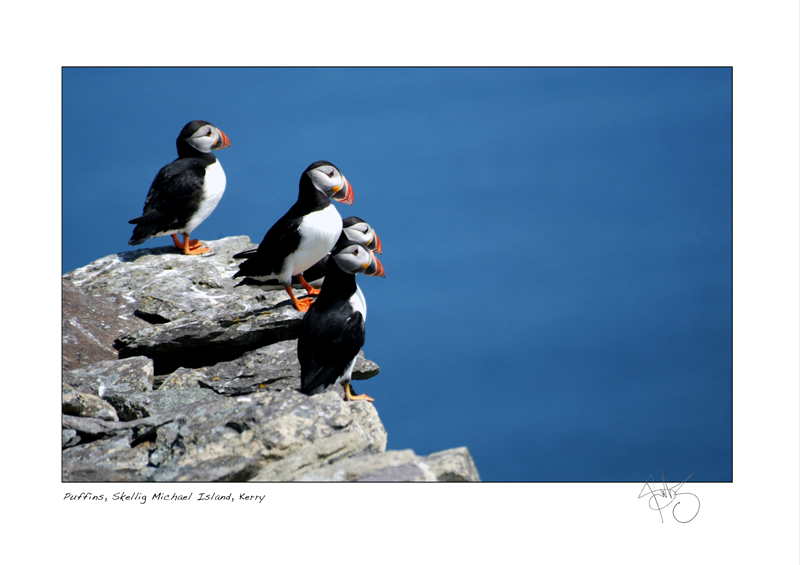 40. Puffins, Skellig Michael