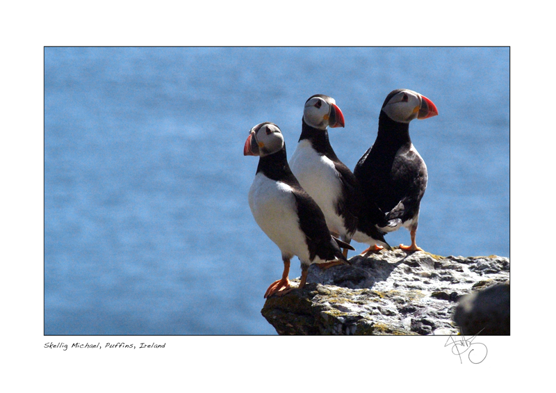 7. Skellig Michael Puffins