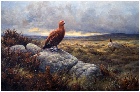 Julian Friers paintings Red Grouse