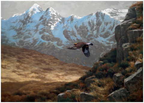 JULIAN FRIERS RUA - Golden Eagle, Isle of Skye