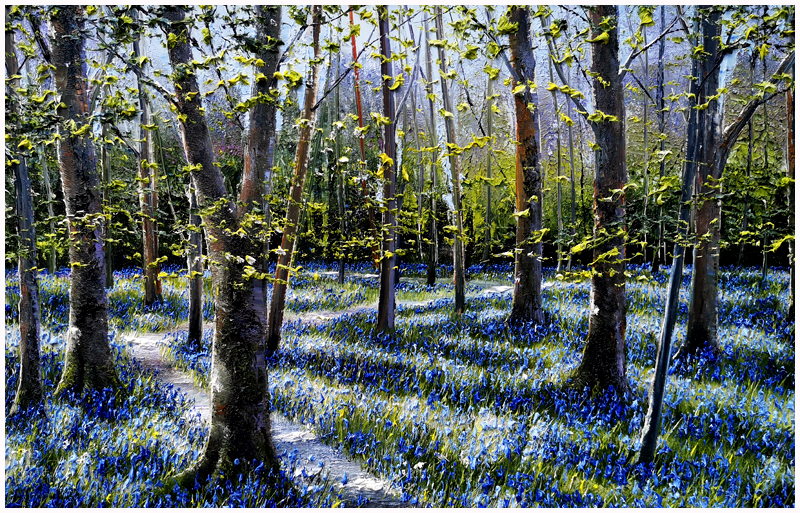 MARK ELDRED - Muckross Bluebells, Killarney