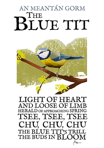 Blue Tit Birds of Ireland Roger O'Reilly Ireland poster Store