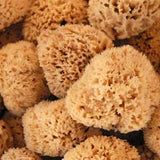 Small Natural Sponge