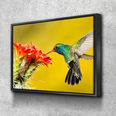 Broad Billed Hummingbird - Amazing Canvas Prints