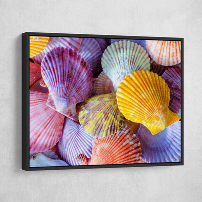 Colorful Scallop Seashells