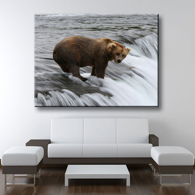Fishing Grizzly Bear - Amazing Canvas Prints