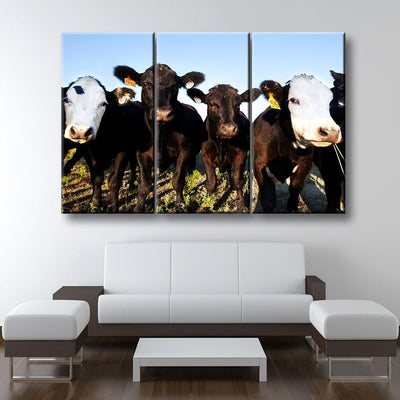 Angus Cattle - Amazing Canvas Prints