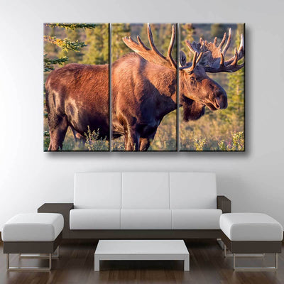 Bull Moose - Amazing Canvas Prints