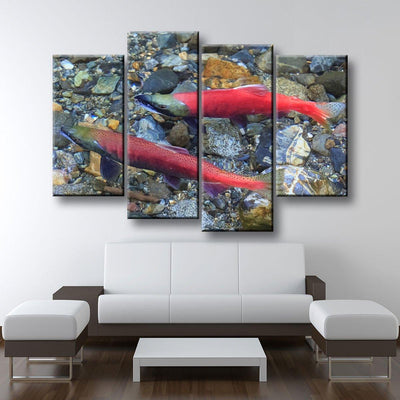Spawning Salmon - Amazing Canvas Prints