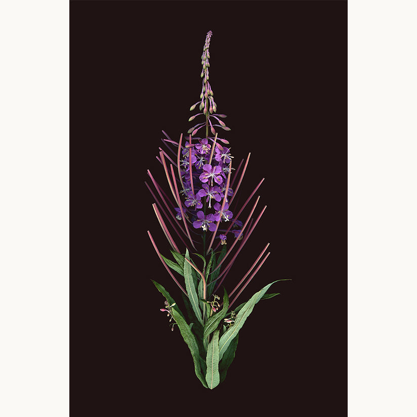 Bouquet No.1 – The Fireweed - Raoul & Simone