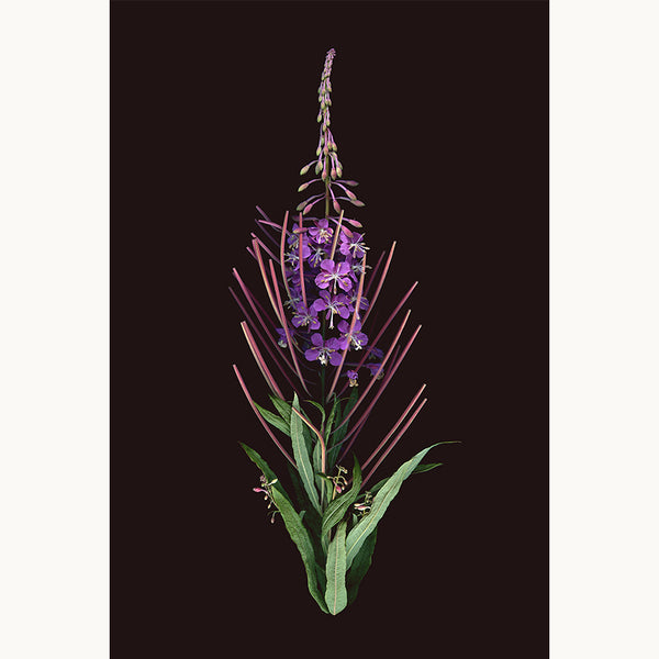 Bouquet No 1 – The Fireweed - Raoul & Simone