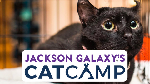 jackson galaxy's cat camp