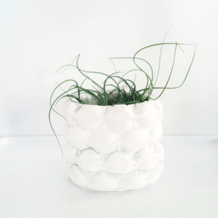 A mini white plaster planter cast of large bubble wrap houses several air plants.