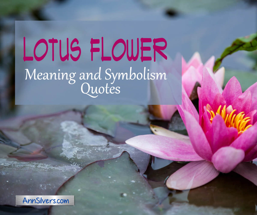 Lotus Flower Meaning and Symbolism Quotes with Graphics