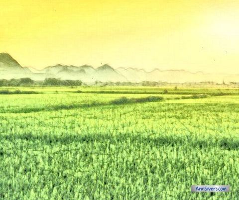 Chinese Farmer Parable rice fields sketch