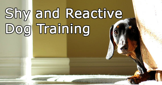 https://diverse-dog-training.myshopify.com/pages/reactive-dogs?nopreview