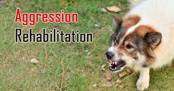 https://diverse-dog-training.myshopify.com/pages/aggression-rehabilitation?nopreview