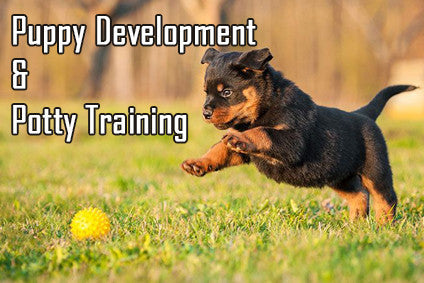 https://diverse-dog-training.myshopify.com/pages/puppy-development